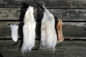 Left: Merino, raw and prepared for spinning; Right: BFL, raw and prepared for spinning.