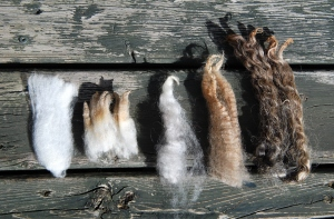 From left to right: Fine wool merino, Down wool Montadale, Primitive wool Shetland, Long wool BFL, Long wool English Leicester.