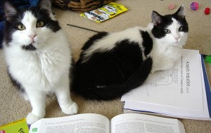 Proof positive that sitting on papers is coded into cat DNA. These are feral kittens that had never seen books before, but what did they do?  Why sit on them immediately! And GRIN.