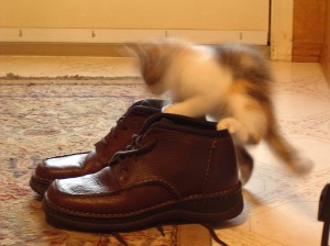 Shoes, the ultimate play toy.
