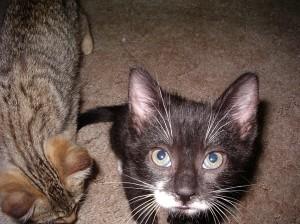 Worst. Kitten. Photo. Ever.