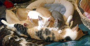 Serena and her kittens.