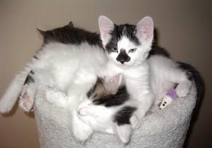 Pile 'o kittens…