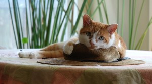 Gardening hats. Are there any better places to nap?