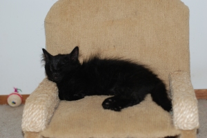 A kitten sized chair with built in scratching post arms. Is there anything better in this world?