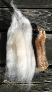 Left: BFL wool combed into top ; Right: a lock of naturally coloured BFL wool, about 6.5 inches in length. Click to enlarge.