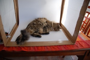 The first incarnation of a photo box for product photography… and the NOT helpful studio cat.